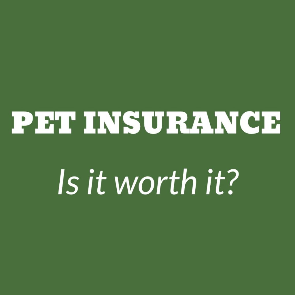 Pet Insurance – Is it worth it?
